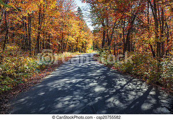 Road in fall forest - csp20755582