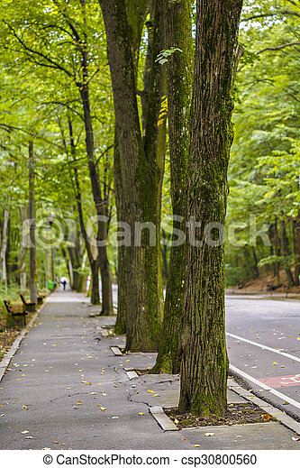 road in the forest park - csp30800560