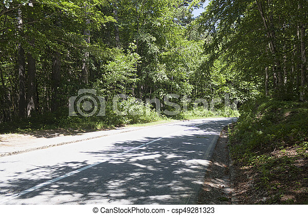 Road in the forest - csp49281323