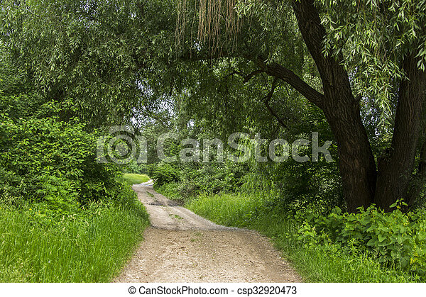 road in the green forest on a sunny day - csp32920473