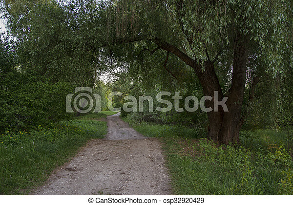 road in the green forest on a sunny day - csp32920429