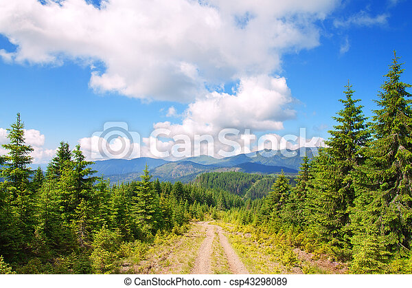 road in the mountains with pine trees - csp43298089