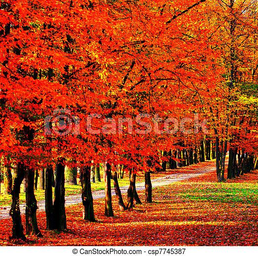 Road in the park - csp7745387