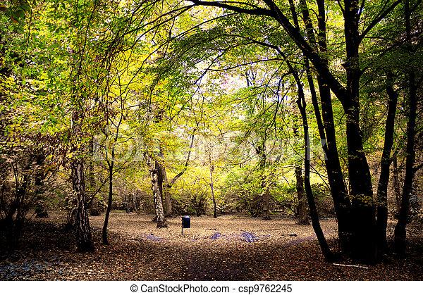 Road in the park - csp9762245