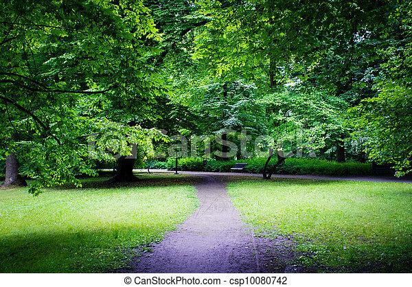 Road in the park - csp10080742