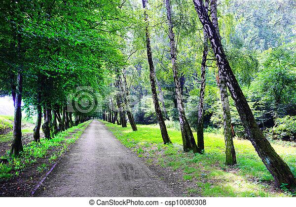 Road in the park - csp10080308