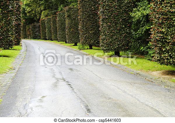 Road in the park - csp5441603
