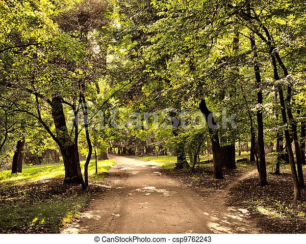 Road in the park - csp9762243