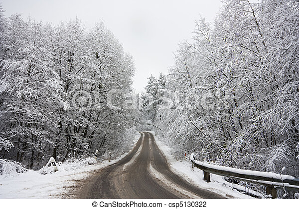 road in the winter forest - csp5130322