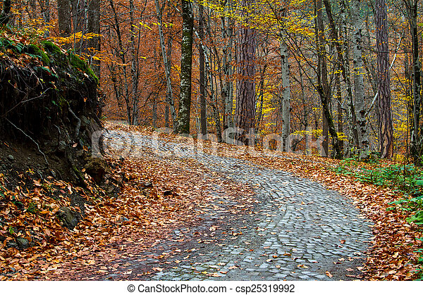 Road of Forest in Autumn - csp25319992