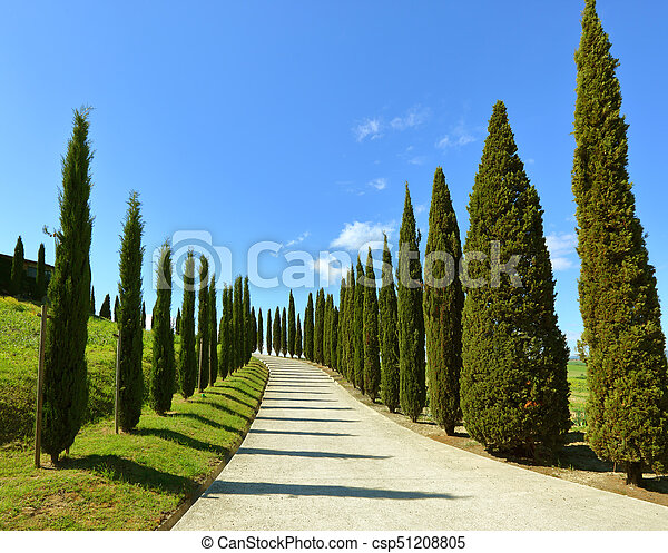 Road on hill with cypress trees in Tuscany - csp51208805