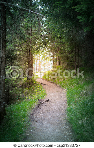Road Path Goes To Sun Light At The End Of The Forest Tunnel   Csp21333727