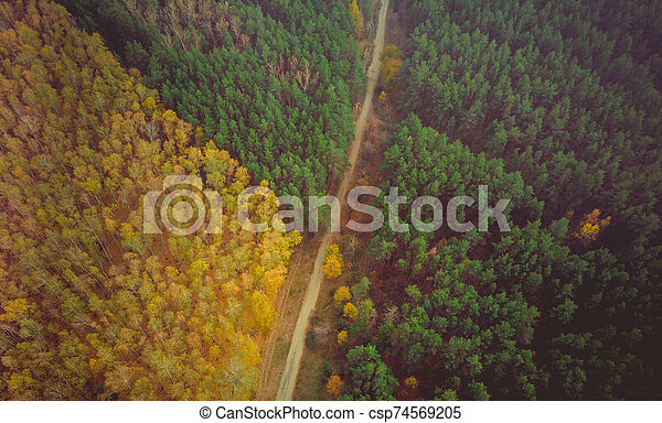 Road surrounded by a colourfull trees in the forest. - csp74569205