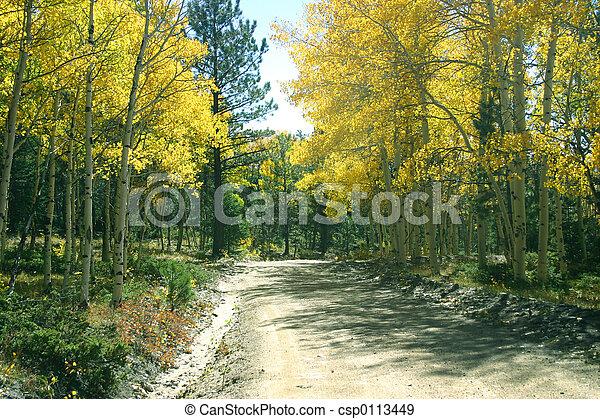 Road Through Aspens - csp0113449