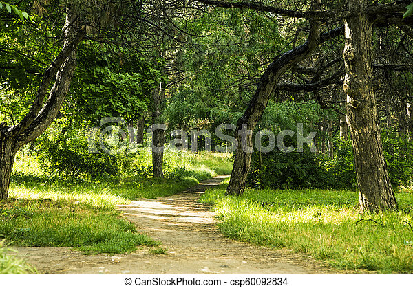 Road through Natural Forest - csp60092834