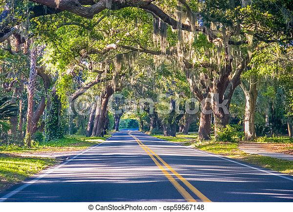 Road Through Oak Trees - csp59567148