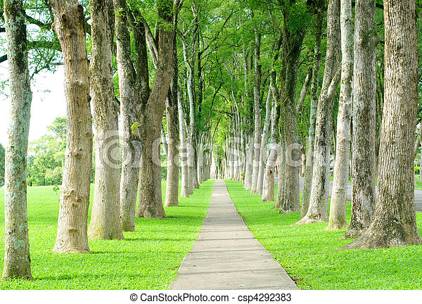 road through row of trees - csp4292383