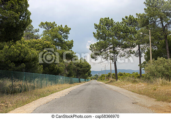 Road with pine trees - csp58366970