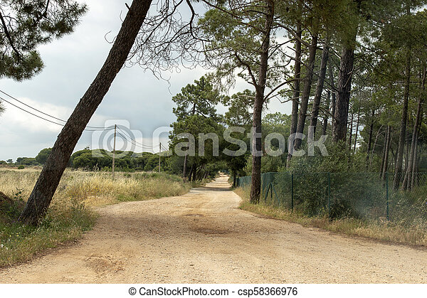 Road with pine trees - csp58366976