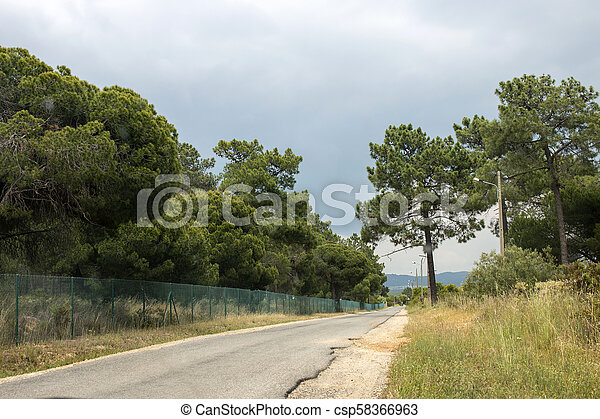 Road with pine trees - csp58366963