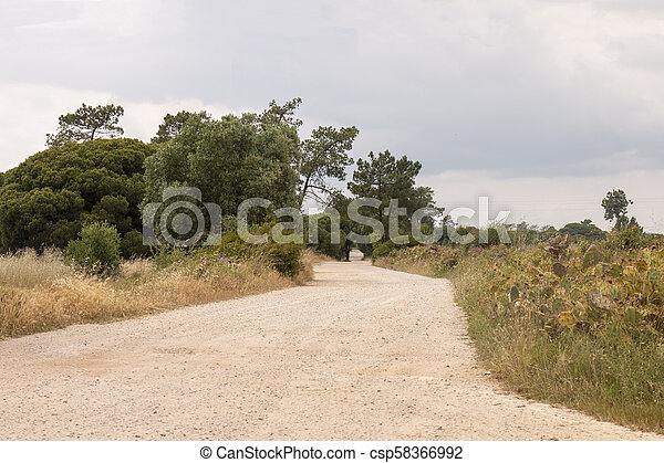 Road with pine trees - csp58366992