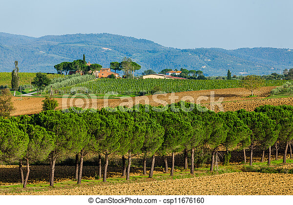 Road with pine trees Tuscany - csp11676160