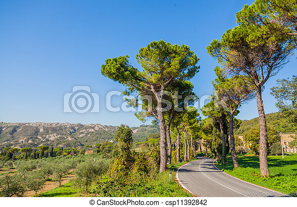 Road with pine trees Tuscany - csp11392842