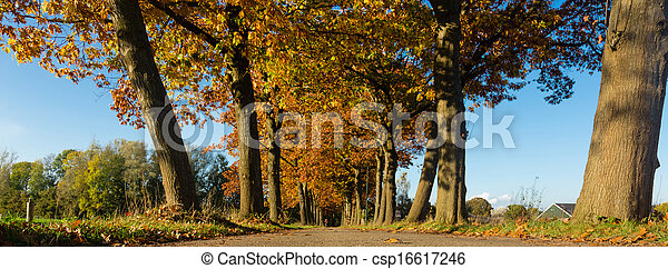 road with trees - csp16617246