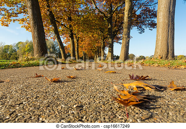road with trees - csp16617249