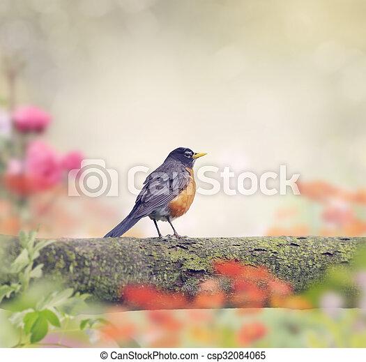 Robin Bird on a Branch - csp32084065