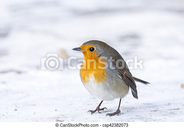 robin on a branch - csp42382073