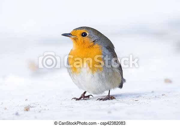 robin on a branch - csp42382083