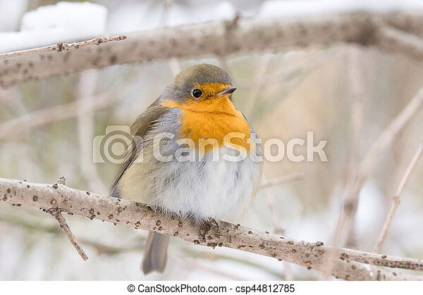 robin on a branch - csp44812785