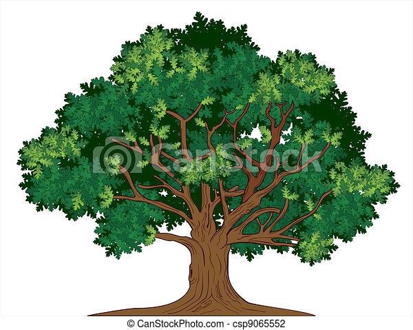 roble, vector, árbol - csp9065552