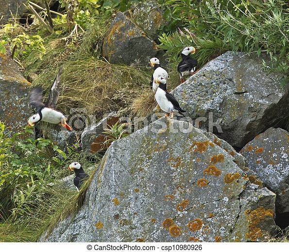 roccioso, habitat - csp10980926