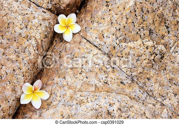 Rock Flower Composition - csp0391029