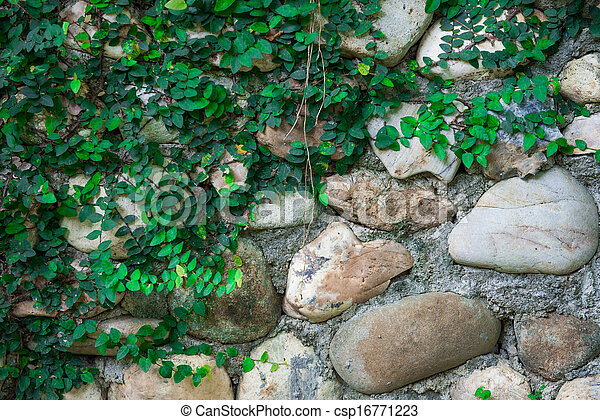 Rock wall and climber plant - csp16771223