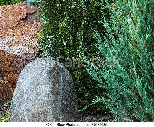 Rockery in the garden. - csp79578635