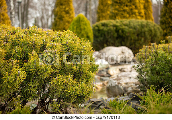 Rockery in the garden with stones and variety of different flowers and plants - csp79170113