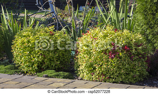 Rockery with big stones and different plants in the garden - csp52077228