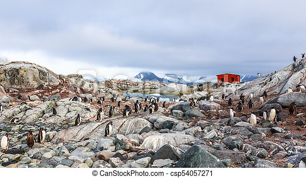Rocky coastline overcrowded with flock of gentoo penguins and fjord with polar hut in the background, Peterman island, Antarctic peninsula - csp54057271