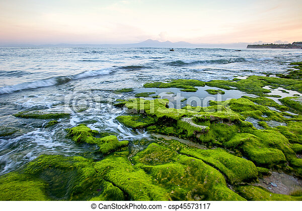 Rocky shore covered with green algae in the early morning with mountain views - csp45573117