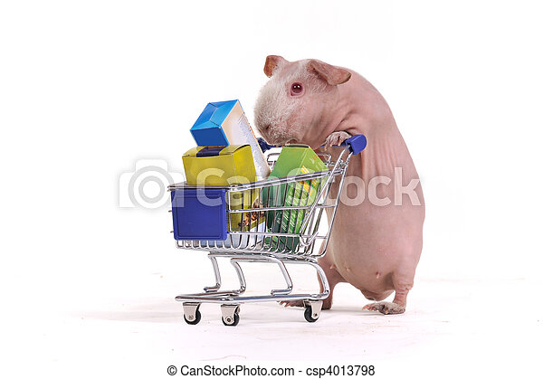 Rodent in a Shop - csp4013798