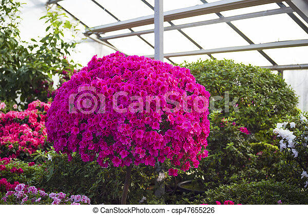Rododendro flores jard n azalea rosa garden - Rododendro arbol ...