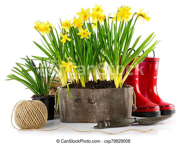 rojo, flores del resorte, rubber., olla - csp79829008