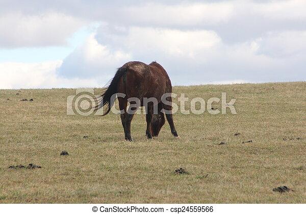 rolando, cavalo, prado - csp24559566