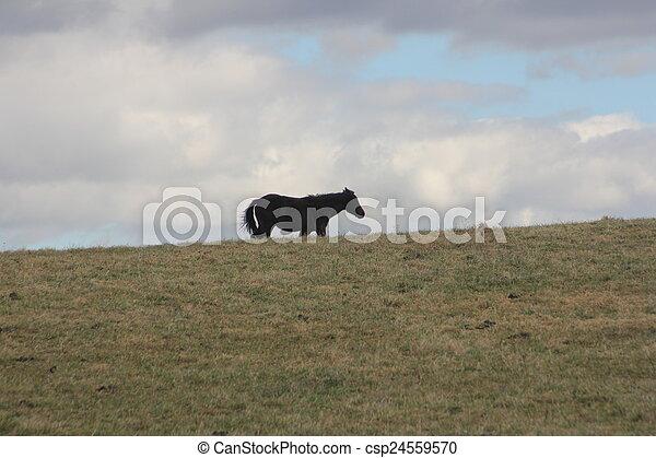 rolando, cavalo, prado - csp24559570