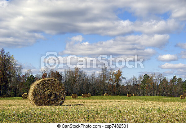 Rolls of hay in a field                  - csp7482501