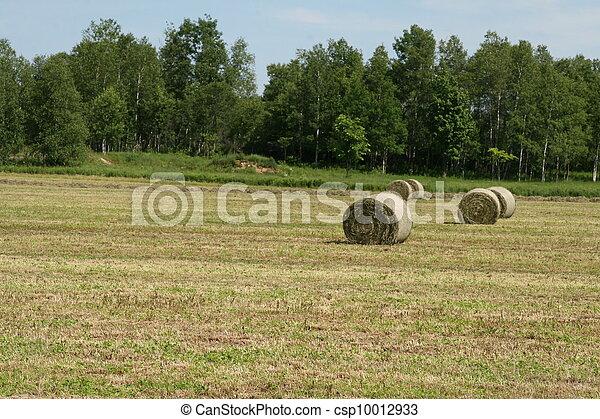 Rolls of hay in field - csp10012933