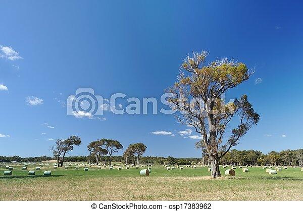 rolls of hay - csp17383962